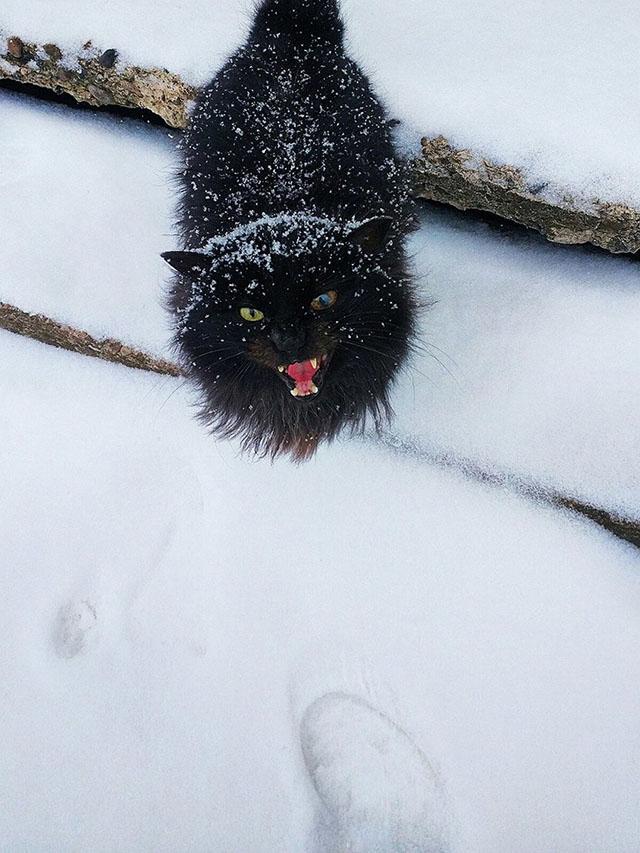 Прикольные котики и киски (50 фото)
