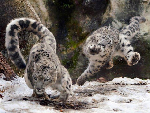 Приколы про животных (50 картинок)
