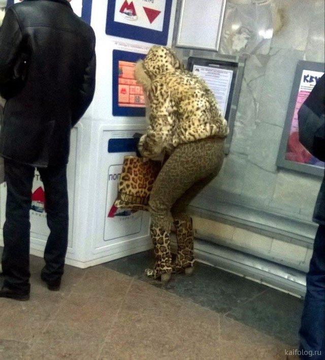 Леопардовый кошмар (45 фото)