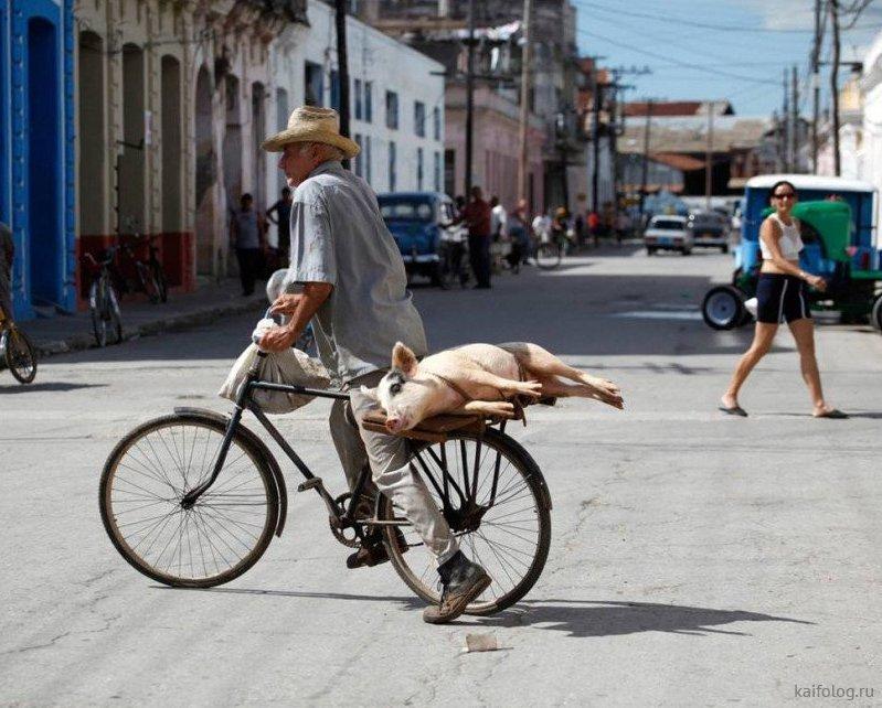 картинки велосипед смешные приняли мученическую смерть