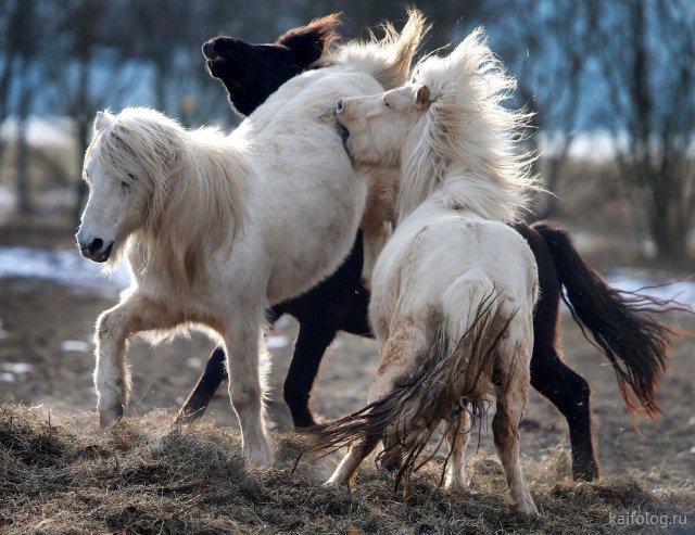 Смешные и забавные животные (50 фото)