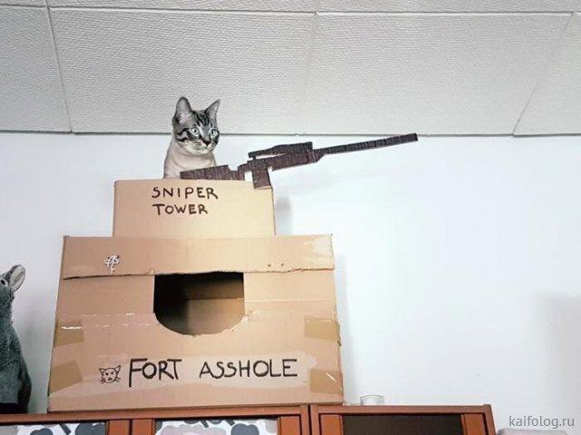 Прикольные котики (50 фото)