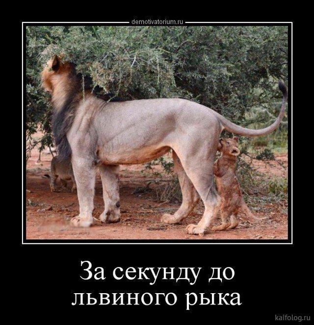 http://kaifolog.ru/uploads/posts/2018-05/1527306938_037.jpg