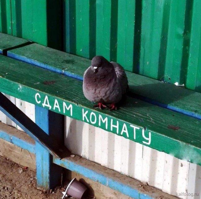 Народные русские приколы (50 фото)