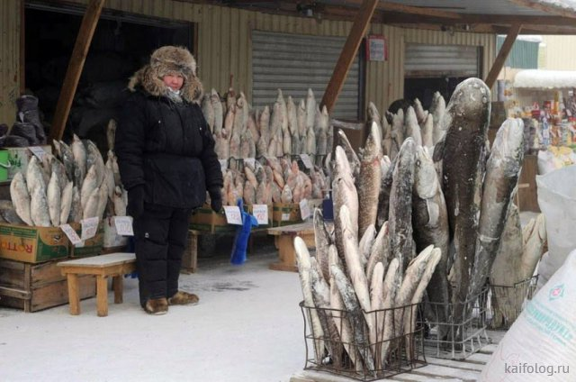 Рыбные приколы и маразмы (45 фото)