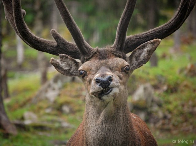 Прикольные фото животных (50 штук)