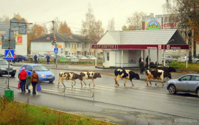 Приколы из России (57 фото)