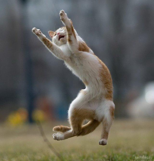 Летающие коты (50 фото)