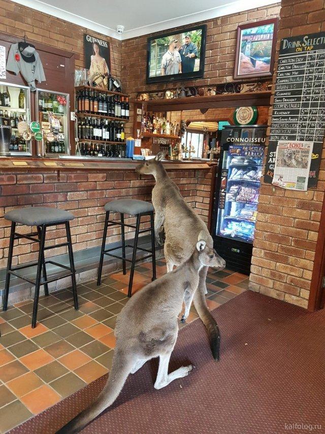 Тем временем в Австралии (50 приколов)