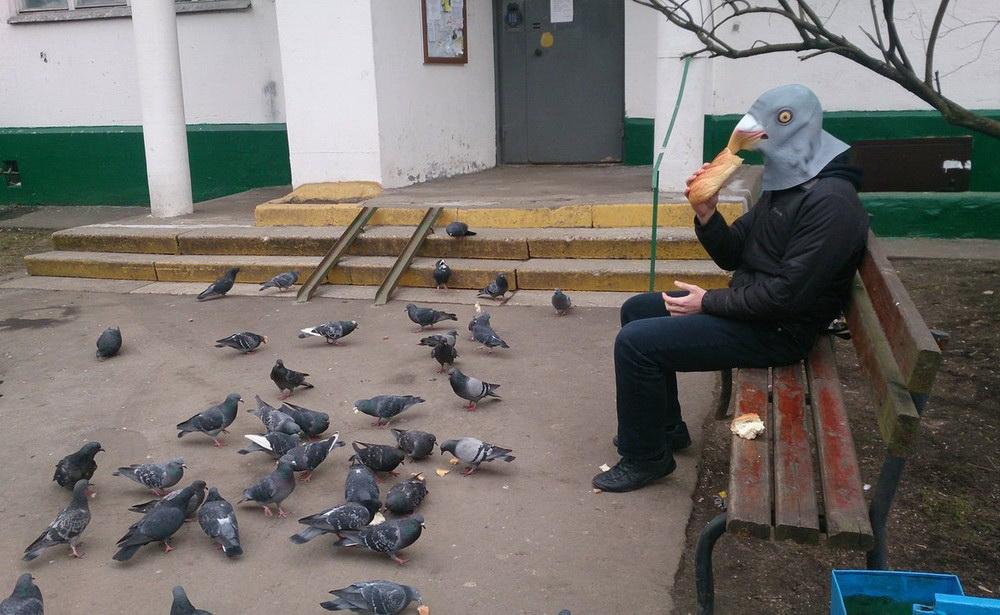 под названием приколы с голубями фото подходит для