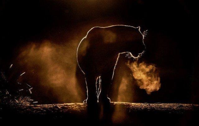 Прикольные животные (45 картинок)