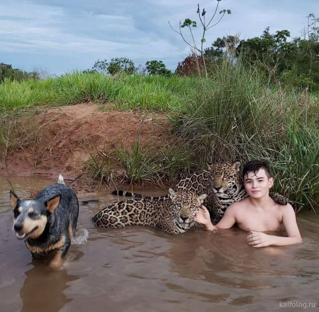 Прикольные фото животных (40 штук)
