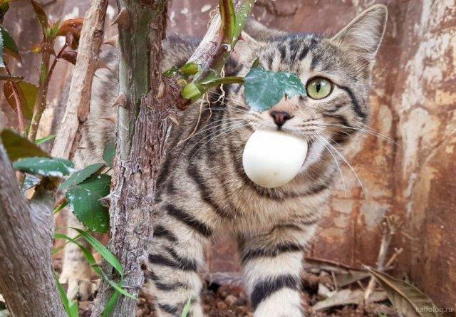 Лучшие приколы про котов 2018 года (50 фото)