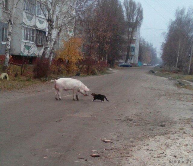 Русские маразмы 2018 года (70 фото)