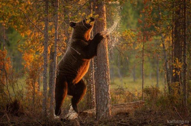 Прикольные звери (55 фото)