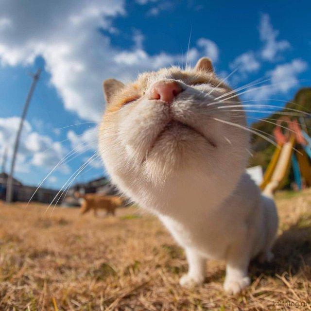 Животный позитив (50 фото)
