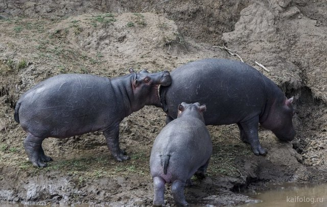 Животные в кадре (50 фото)