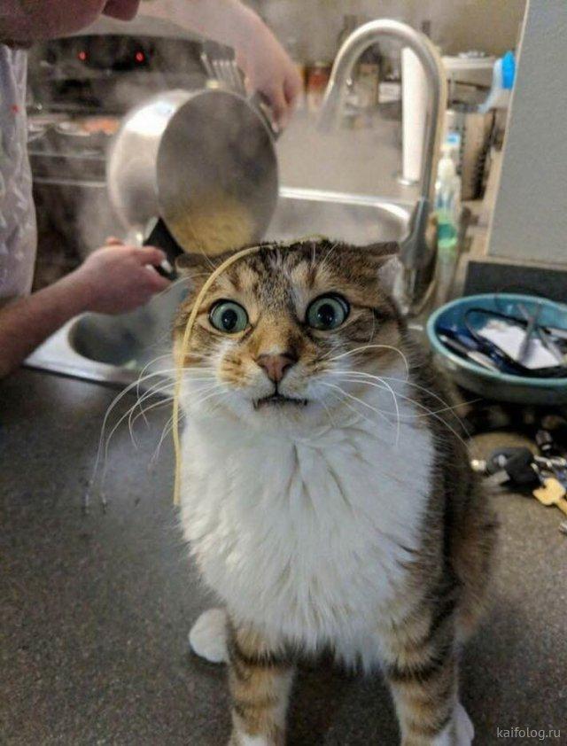 Мартовские коты (45 фото)