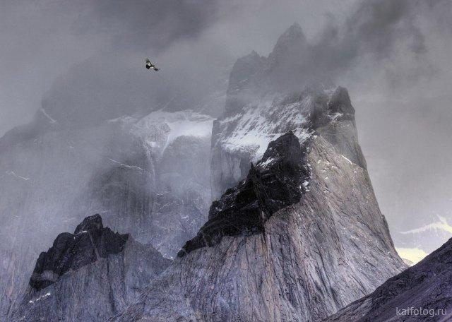 Прикольные фото птиц (50 фото)