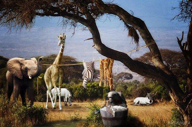 Креативные приколы с животными (55 картинок)