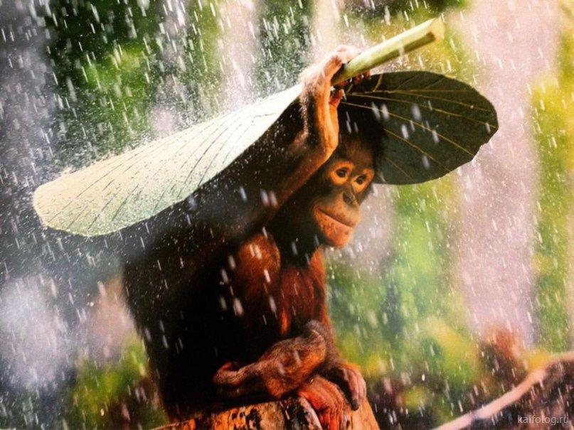 дождь картинка прикол понять, какой