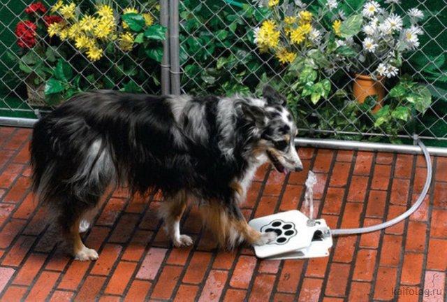 35 прикольных изобретений и товаров для собак