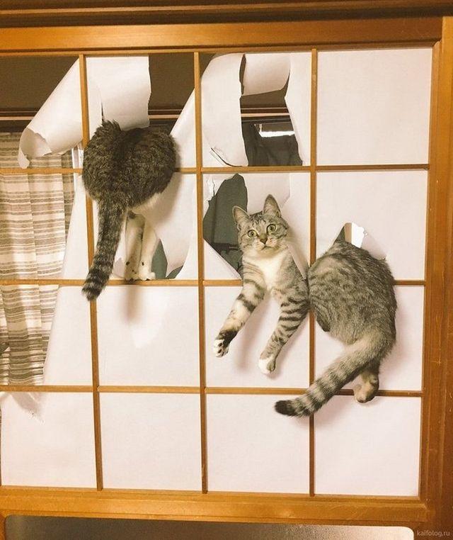 35 самых жутких котов