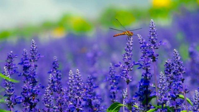 Красивое лето (40 фото)