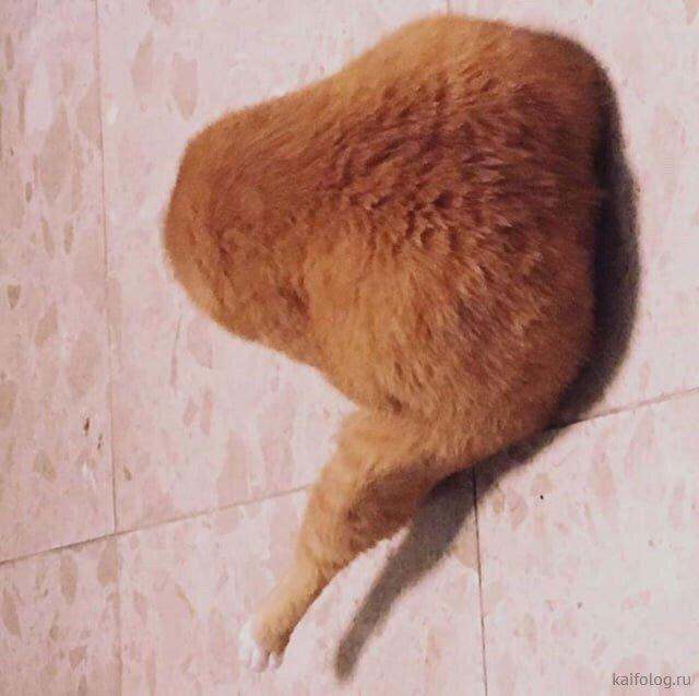 35 прикольных котов