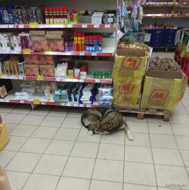 Ужасы и приколы из российских супермаркетов (35 фото)