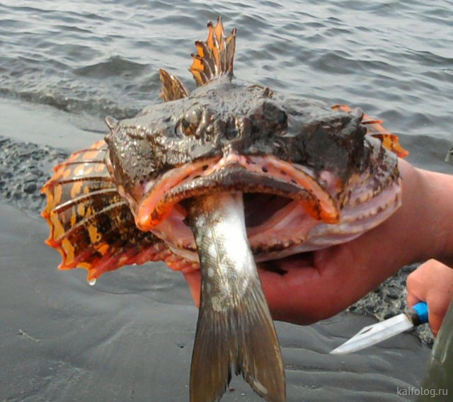 День рыбака (40 приколов)