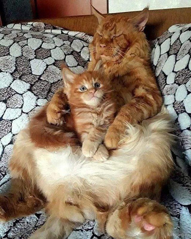 Смешные котики (35 фото)