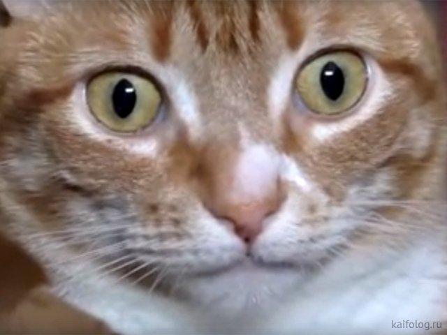 Прикольные видео про котов (5 штук)