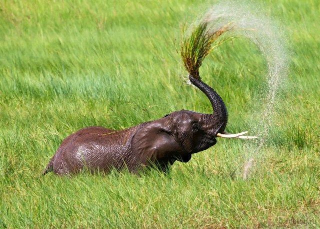 День слонов (35 фото)
