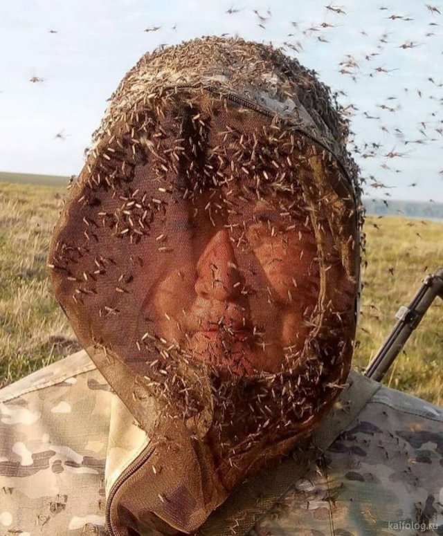 Приколы про комаров (35 картинок)