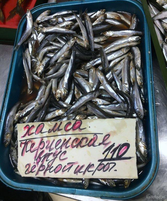 Философские русские приколы (35 фото)
