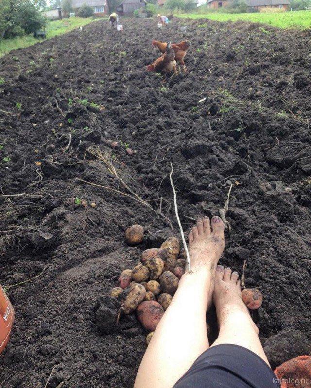 Приколы на день работников сельского хозяйства (40 фото)