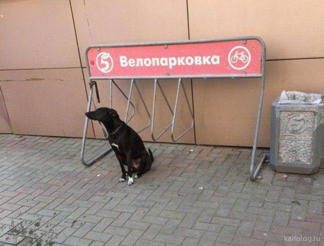 Обычная Россия (35 приколов)