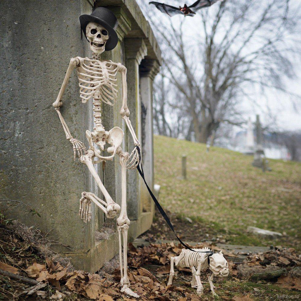 воде смешные картинки с скелетами кажется