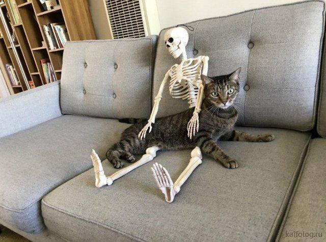 Приколы про скелеты (35 фото)