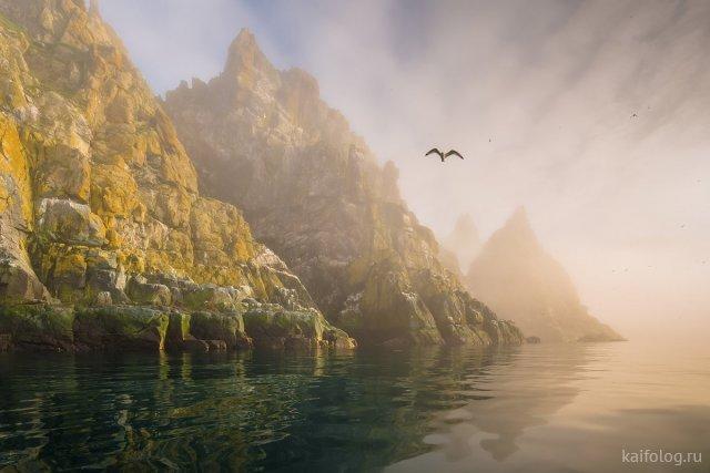 Дикая природа России 2019 (45 фото)