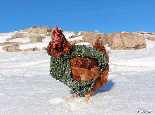 Эти животные уже готовы к зиме (35 фото)