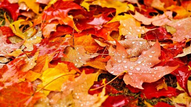 Осенняя красота (35 фото)