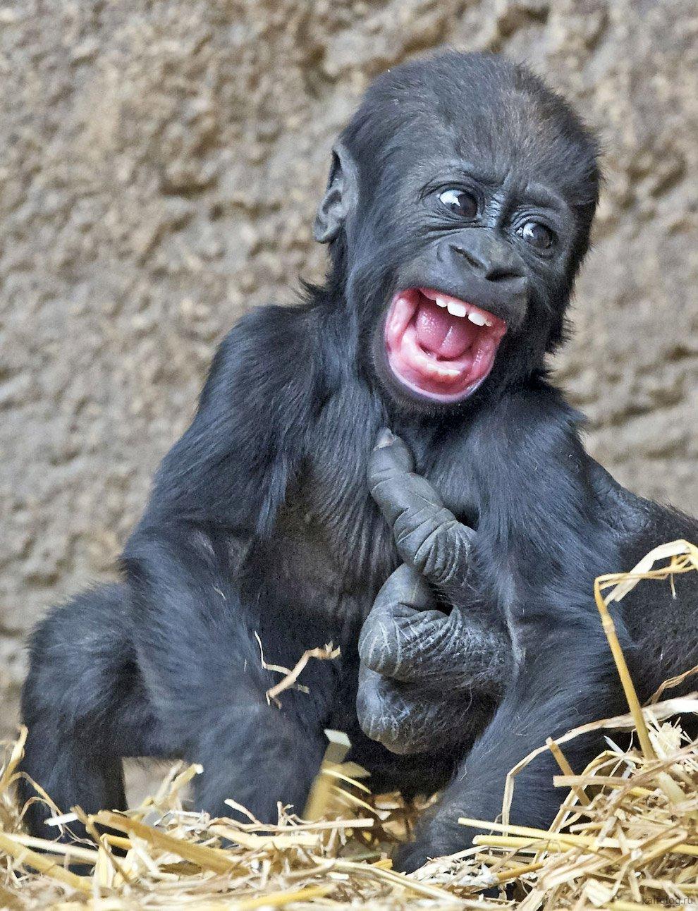 Фотографии веселых смешных человечков