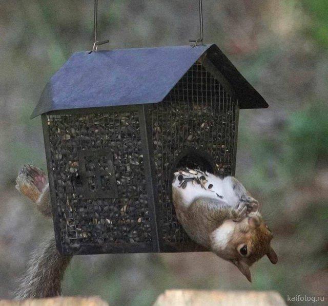 Животные приколы года (55 фото)