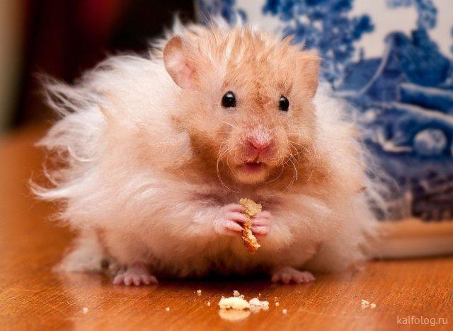 Весёлые мыши (35 фото)