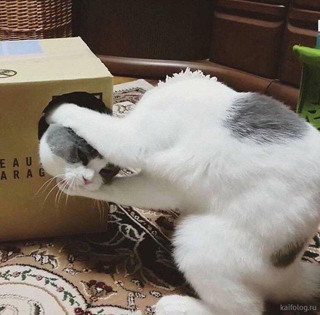 Прикольные кошечки (35 фото)