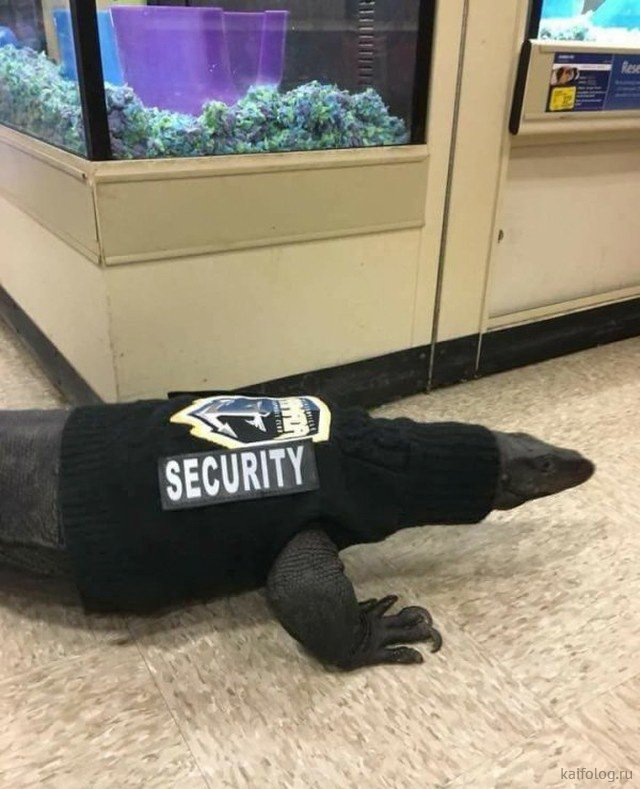 Приколы про охранников и охрану (35 фото)