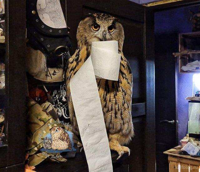 Про туалетную бумагу (40 приколов)