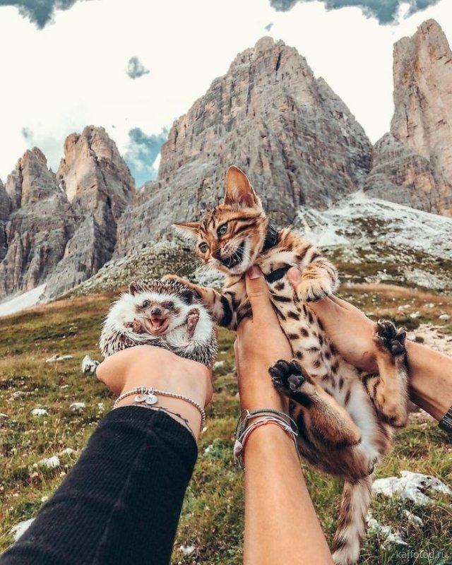 Позитивные фото животных (35 штук)